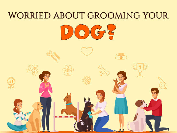 10 Best Dog Grooming Tools to Clean Your Dog at Home